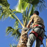 Tree Services St. Tammany Parish