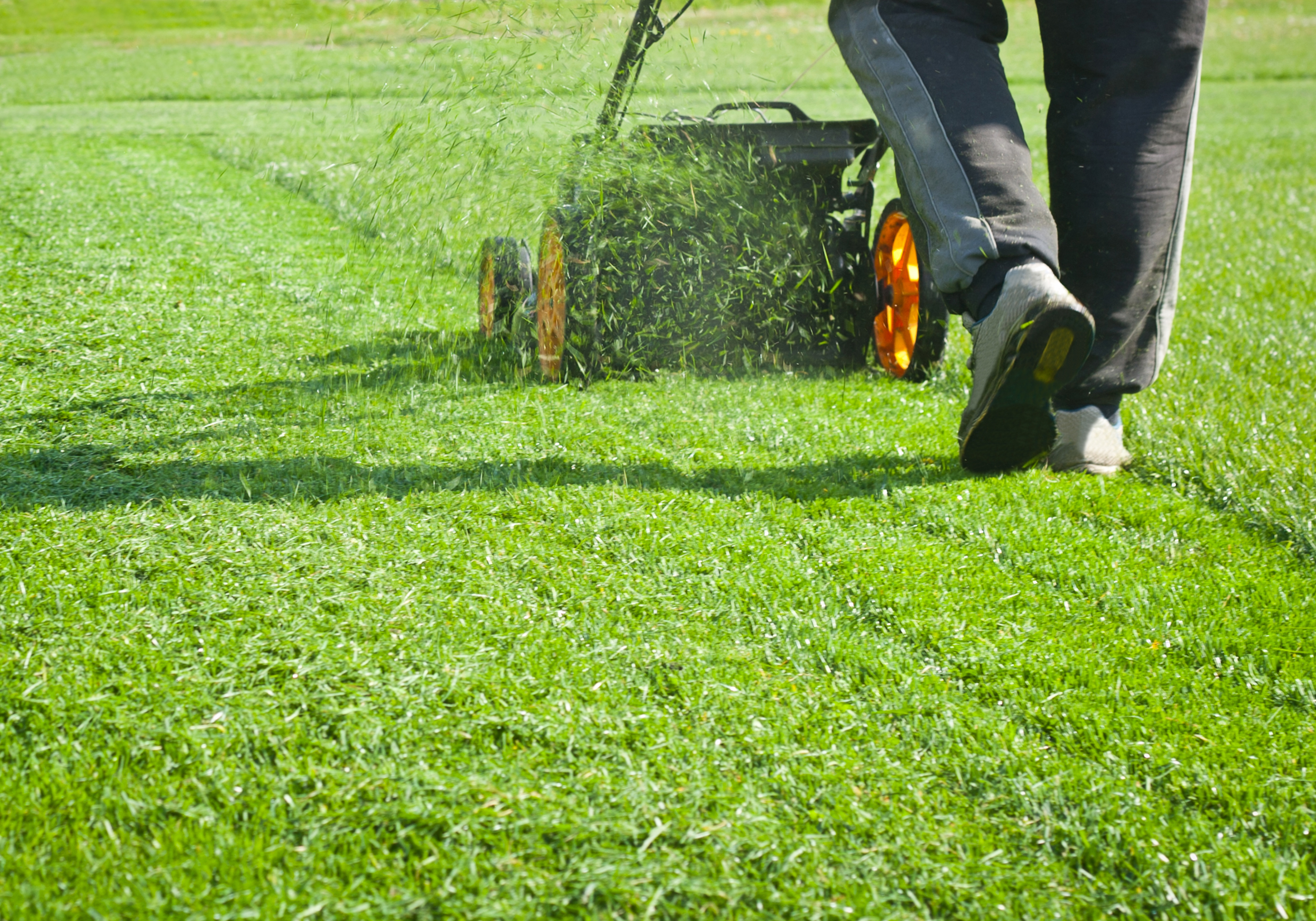 5 basic lawn maintenance tips everyone should know