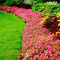 superior-quality-plants