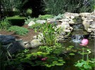 Pond With Waterfall Feature